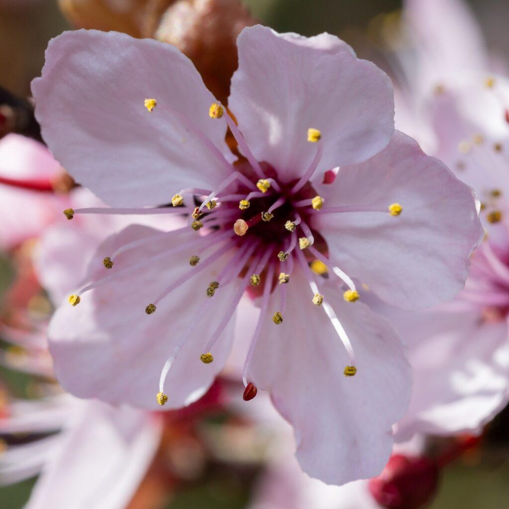 Roze bloem dichtbij